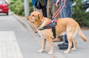 Service dog discretely carries catheters